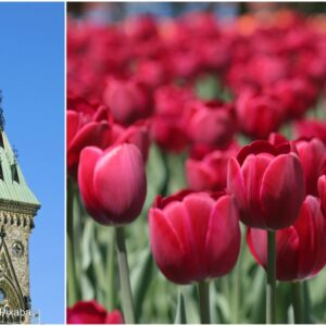 Ottawa 150